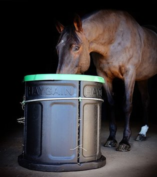 horse eating from a forager slow feeder